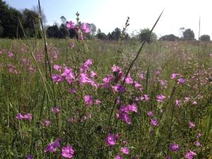 WildflowersLakeFayettevilleMeadow